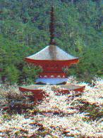 Tahoto Pagode - Miyajima